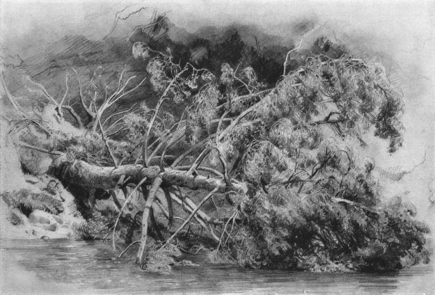 "Ivan Shishkin, ""Fallen tree. Siverskaya"", 1879."